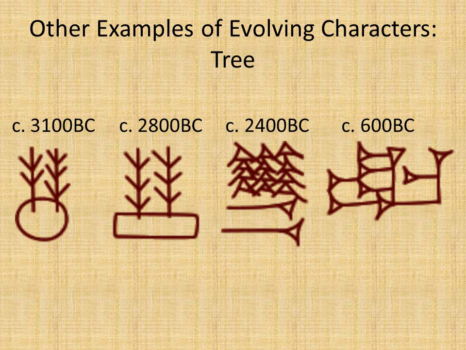 Other Examples of Evolving Characters: Tree