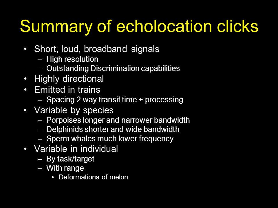 Summary of echolocation clicks