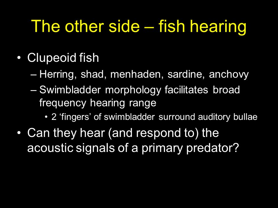 The other side – fish hearing