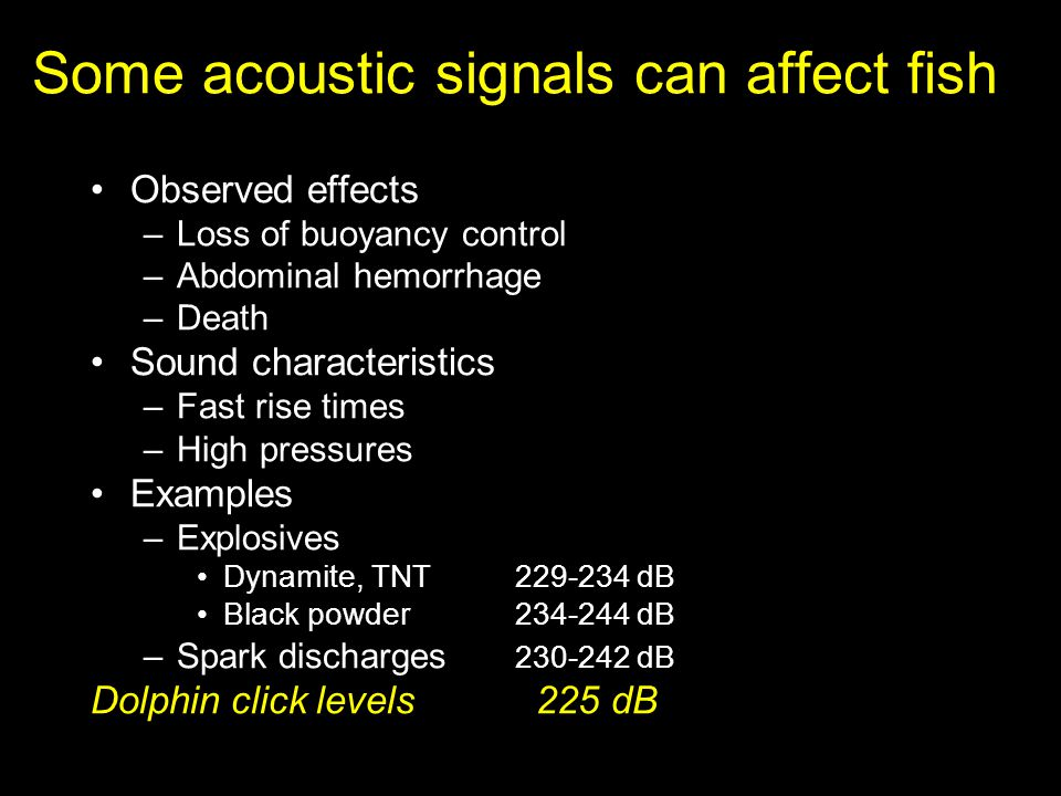 Some acoustic signals can affect fish