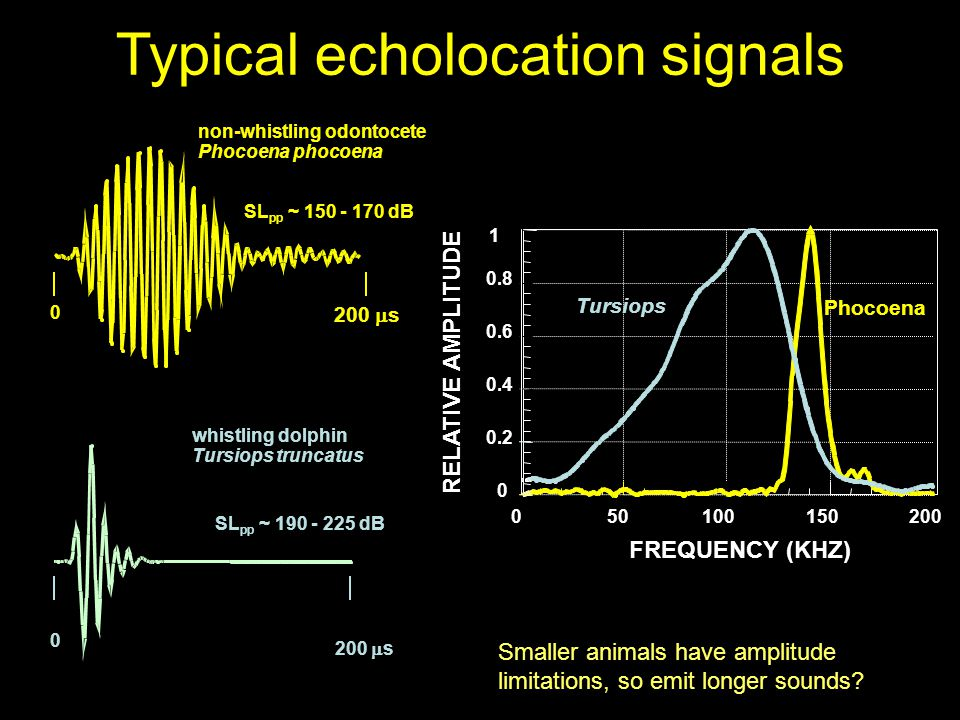 Typical echolocation signals