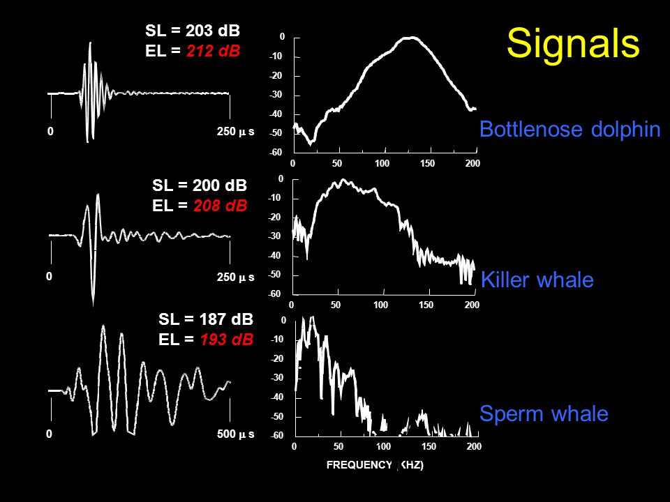 Signals Bottlenose dolphin Killer whale Sperm whale SL = 203 dB