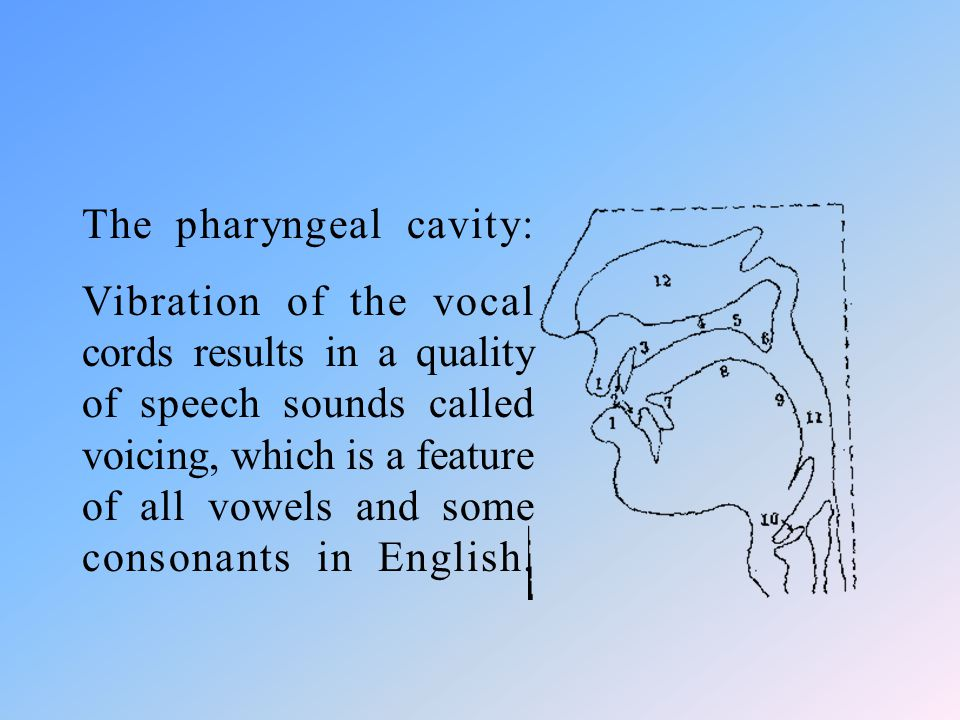 The pharyngeal cavity: