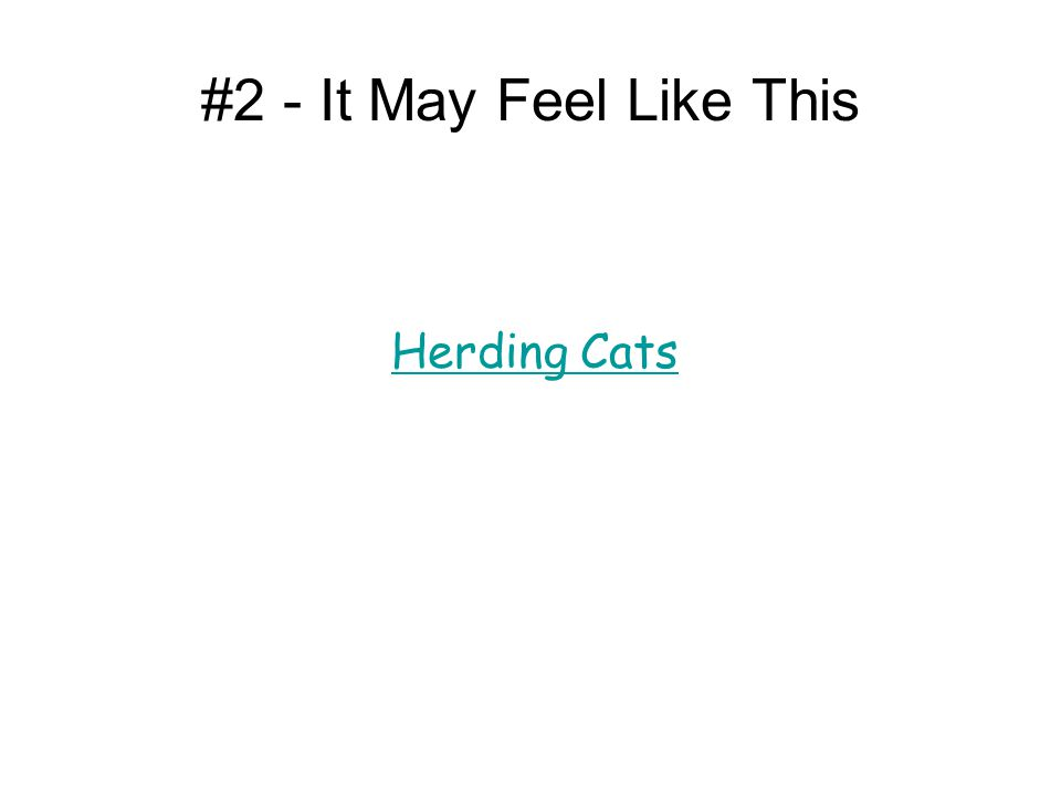 #2 - It May Feel Like This Herding Cats Is this a video