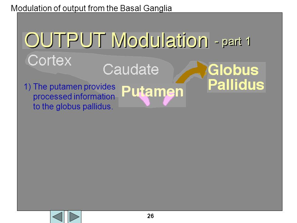 Output modulation - part 1 Modulation of output from the Basal Ganglia