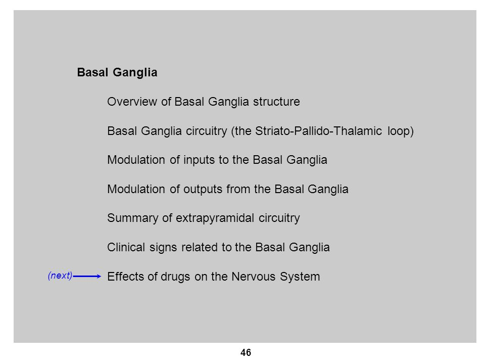 Overview of Basal Ganglia structure