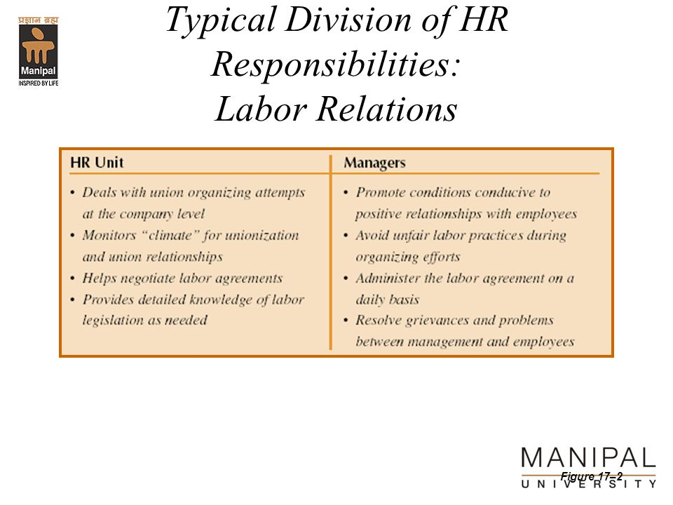 Typical Division of HR Responsibilities: Labor Relations