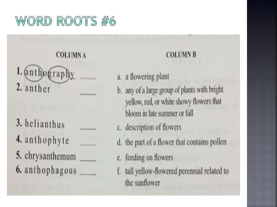 Word Roots #6