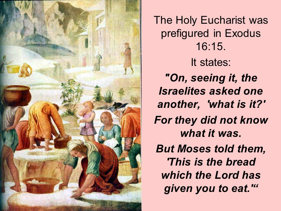 The Holy Eucharist was prefigured in Exodus 16:15