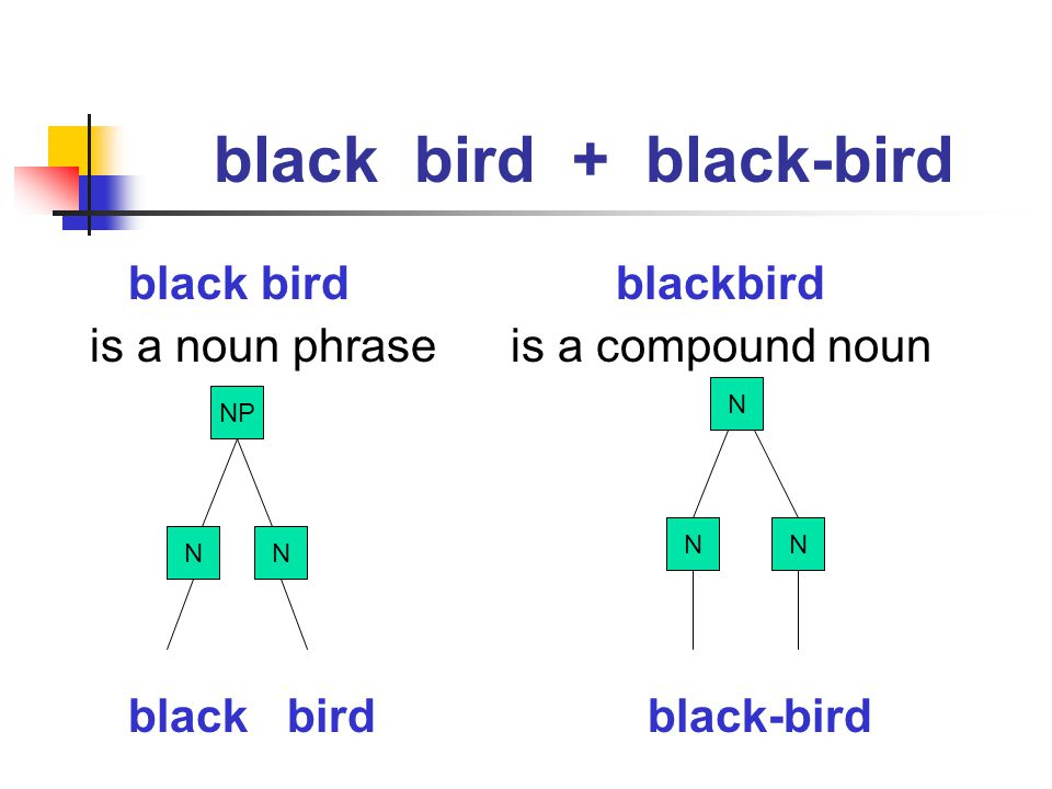 black bird + black-bird
