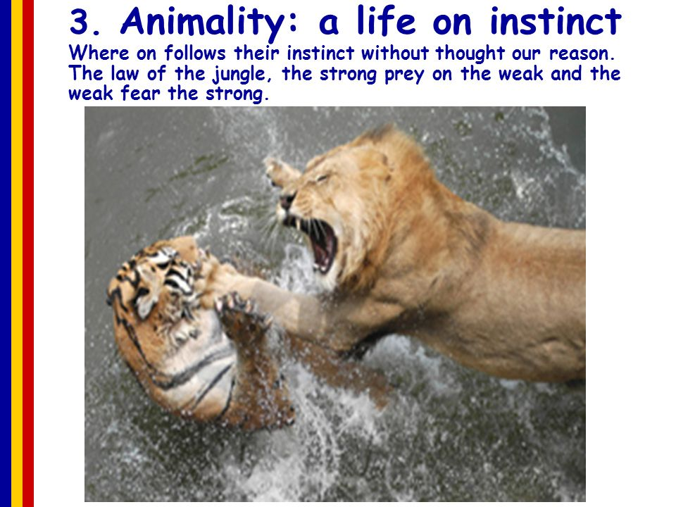 3. Animality: a life on instinct Where on follows their instinct without thought our reason.