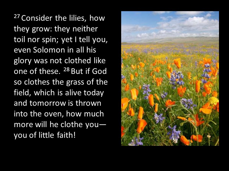 27 Consider the lilies, how they grow: they neither toil nor spin; yet I tell you, even Solomon in all his glory was not clothed like one of these. 28 But if God so clothes the grass of the field, which is alive today and tomorrow is thrown into the oven, how much more will he clothe you—you of little faith!