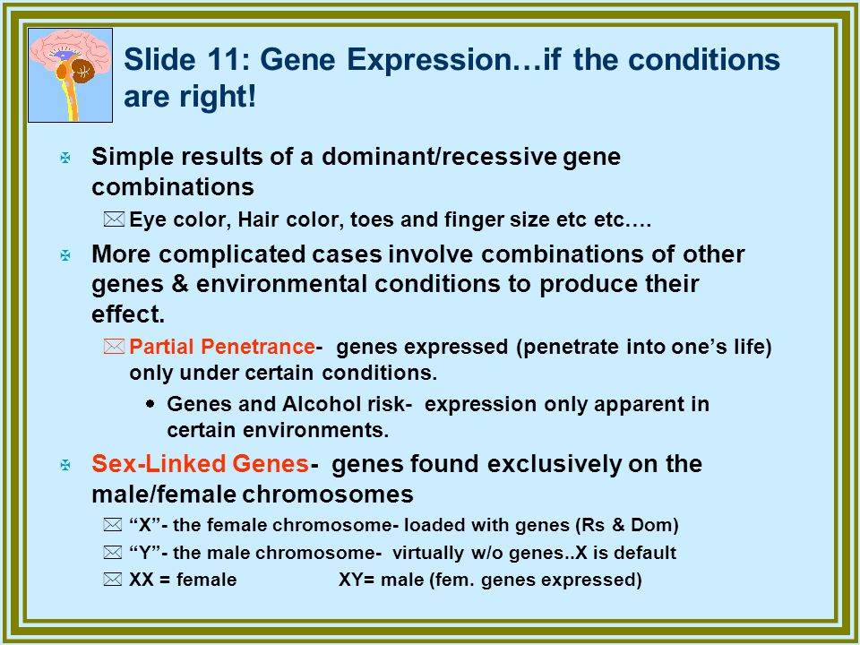 Slide 11: Gene Expression…if the conditions are right!