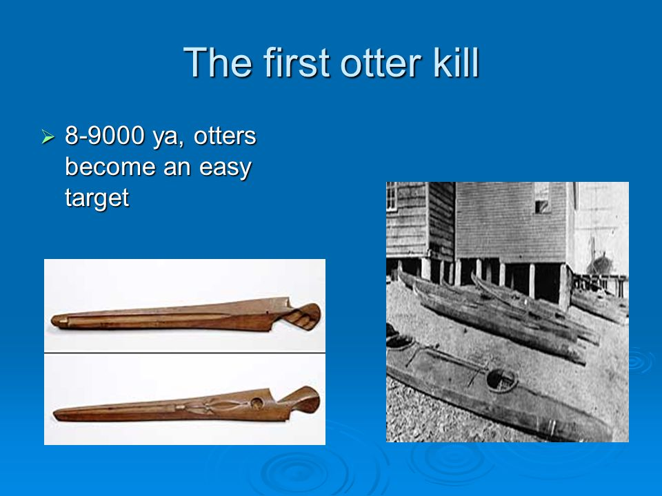 The first otter kill 8-9000 ya, otters become an easy target