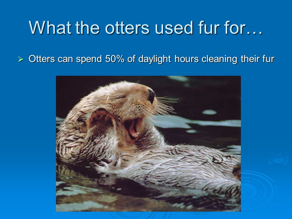 What the otters used fur for…