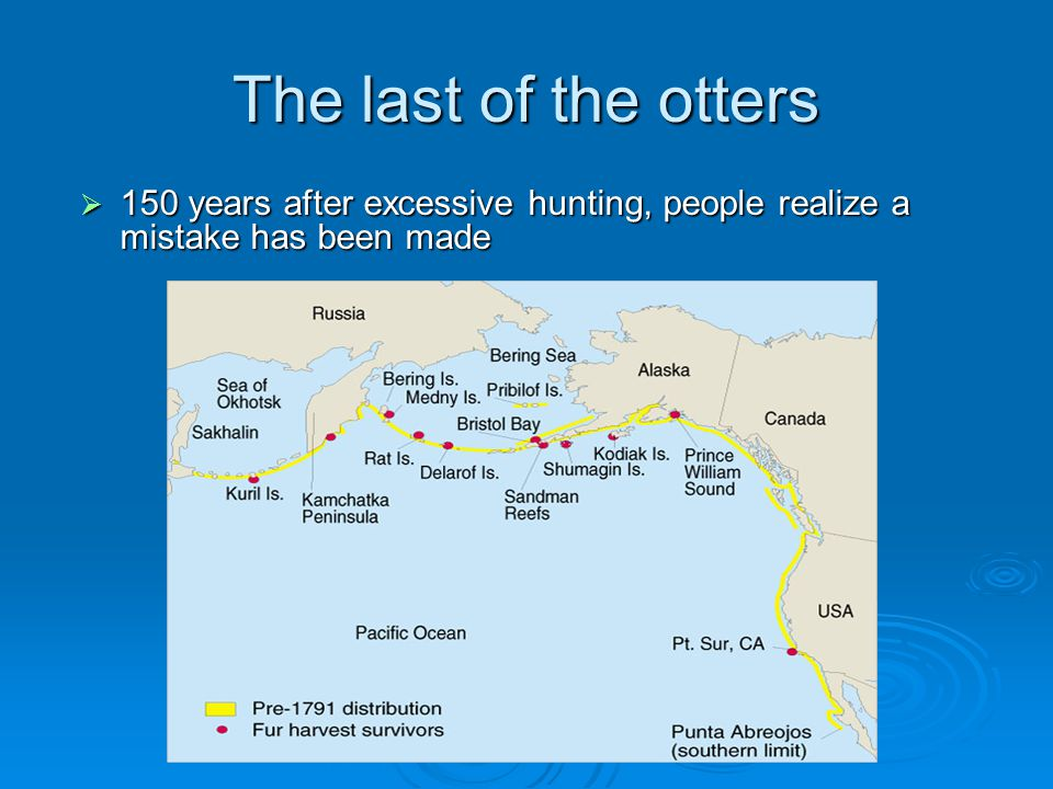 The last of the otters 150 years after excessive hunting, people realize a mistake has been made.