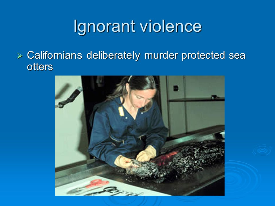 Ignorant violence Californians deliberately murder protected sea otters.