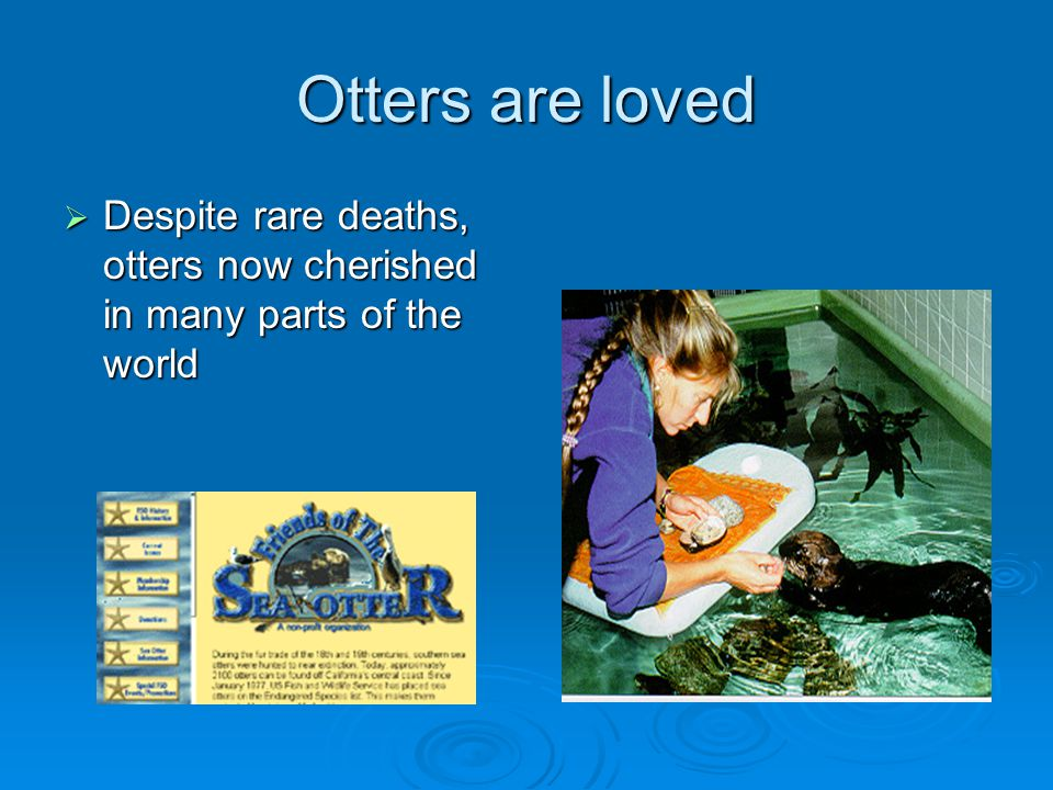 Otters are loved Despite rare deaths, otters now cherished in many parts of the world.