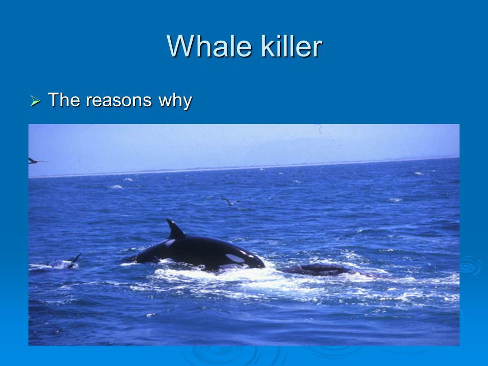 Whale killer The reasons why