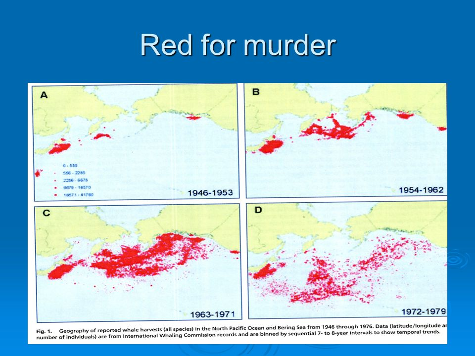 Red for murder Geography of reported whale harvested species in N.