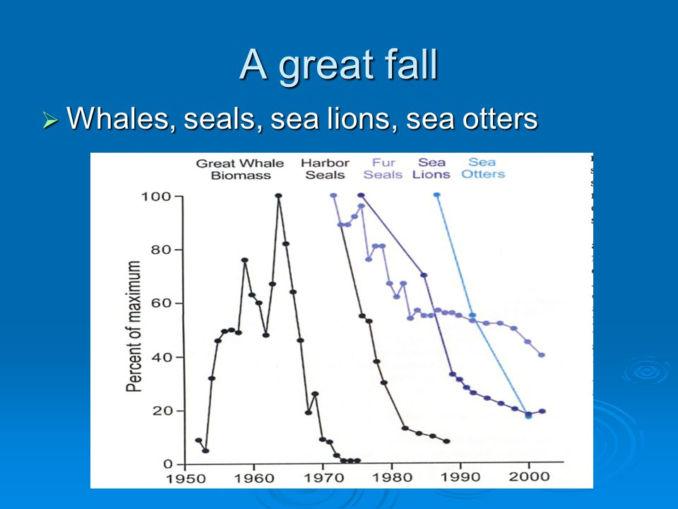 A great fall Whales, seals, sea lions, sea otters