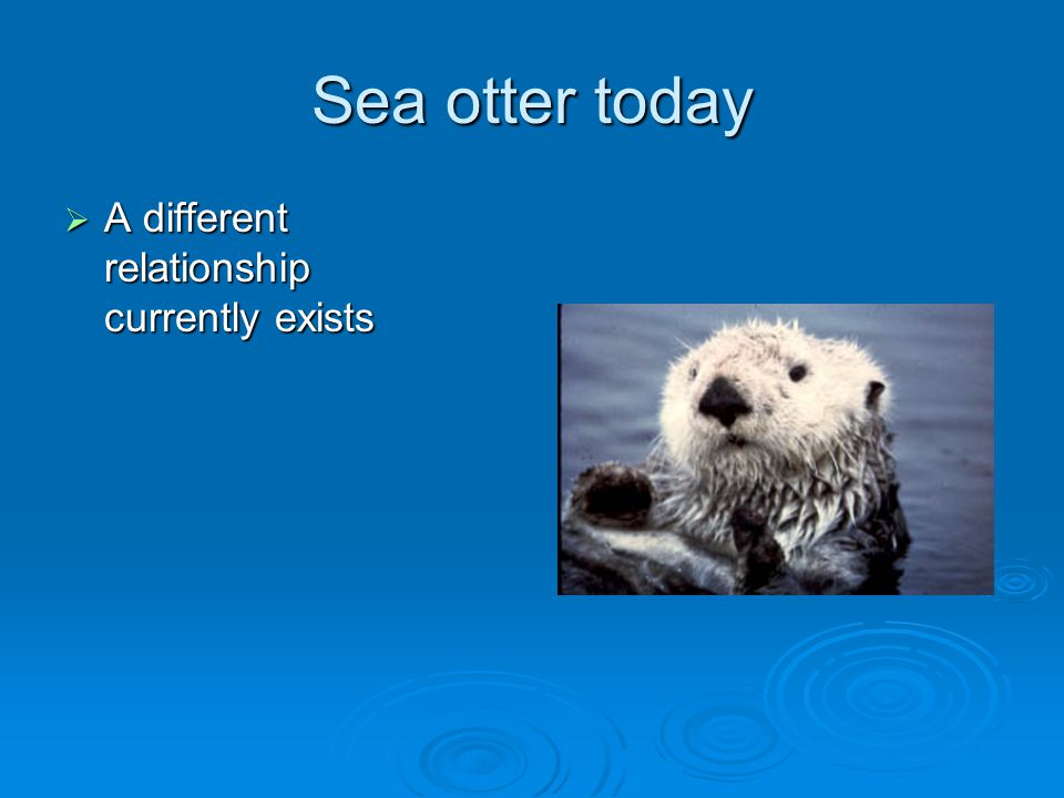 Sea otter today A different relationship currently exists