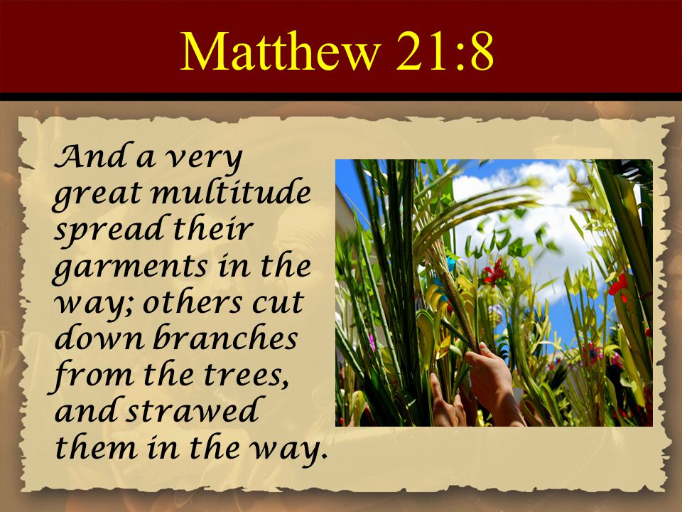 Matthew 21:8 And a very great multitude spread their garments in the way; others cut down branches from the trees, and strawed them in the way.