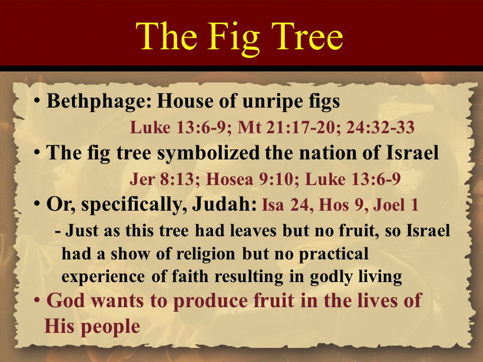 The Fig Tree Bethphage: House of unripe figs