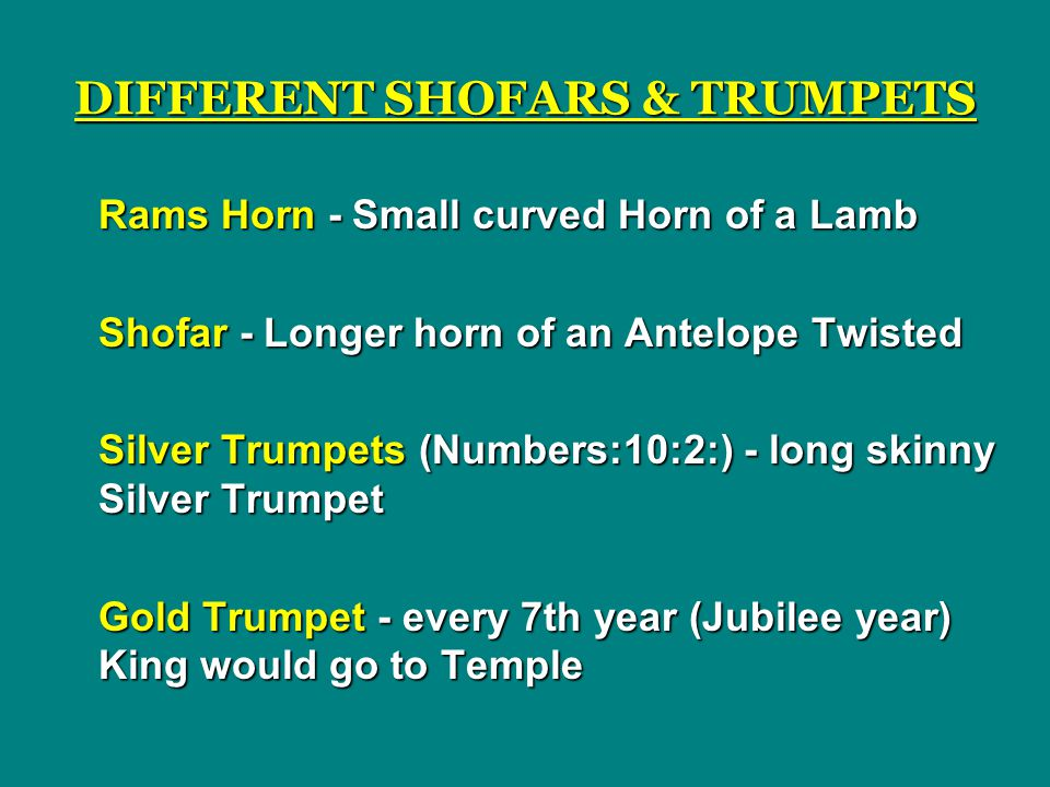 DIFFERENT SHOFARS & TRUMPETS