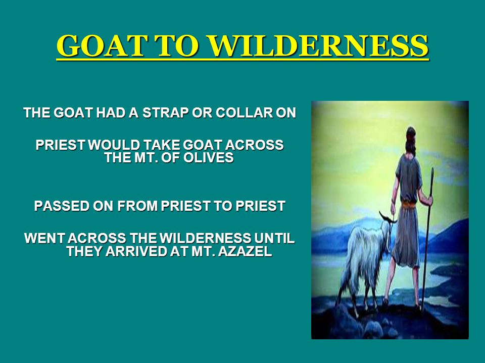 GOAT TO WILDERNESS THE GOAT HAD A STRAP OR COLLAR ON