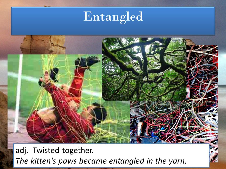 Entangled adj. Twisted together.