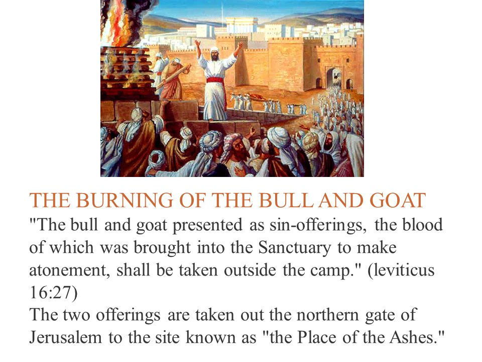 THE BURNING OF THE BULL AND GOAT