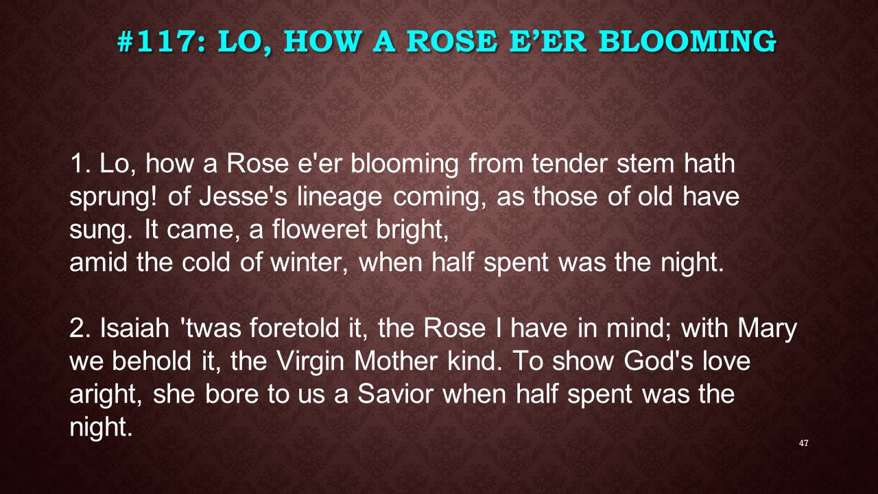 #117: Lo, How a Rose E'ER Blooming