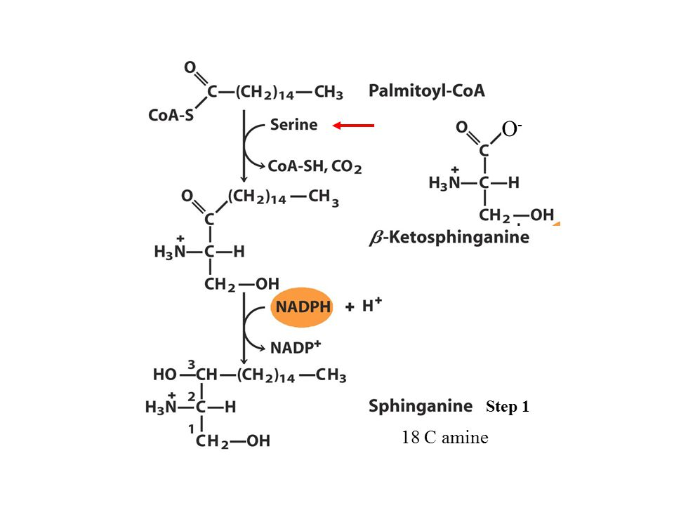 O- Step 1 18 C amine