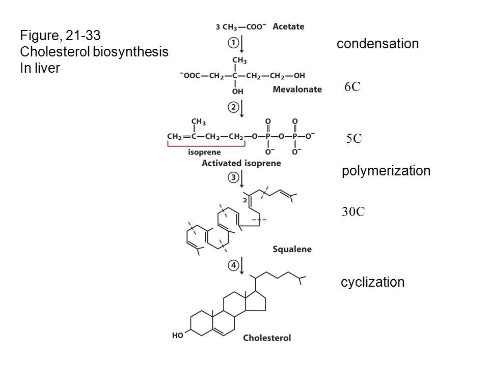 Figure, 21-33 Cholesterol biosynthesis In liver condensation 6C 5C polymerization 30C cyclization