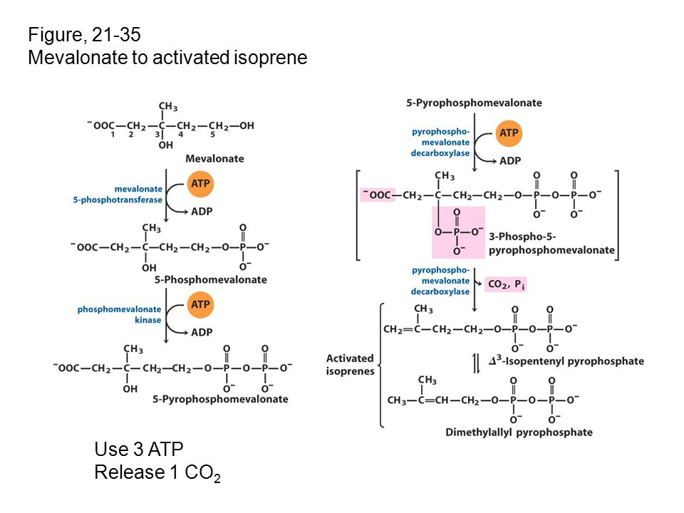 Figure, 21-35 Mevalonate to activated isoprene Use 3 ATP Release 1 CO2