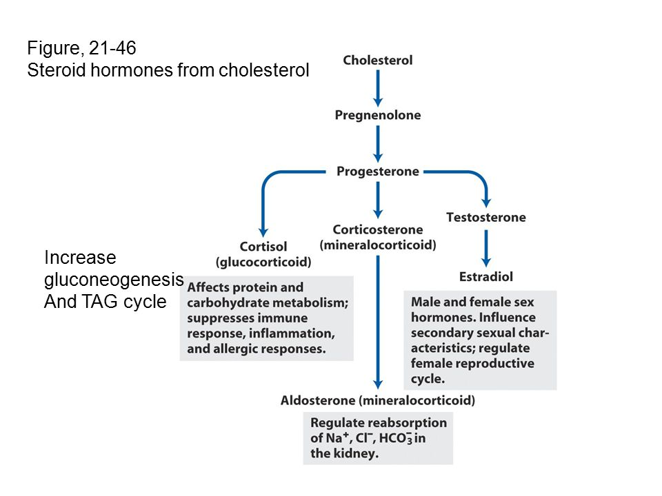 Figure, 21-46 Steroid hormones from cholesterol Increase gluconeogenesis And TAG cycle