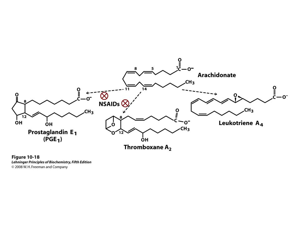 FIGURE 10-18 Arachidonic acid and some eicosanoid derivatives