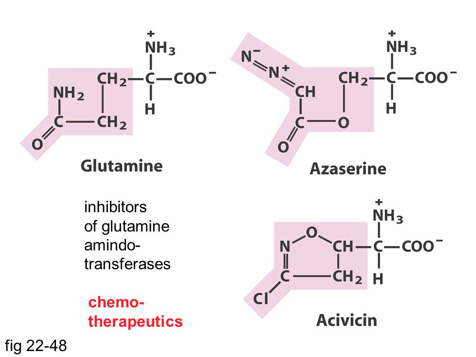 inhibitors of glutamine amindo- transferases chemo- therapeutics fig 22-48