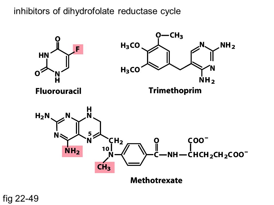 inhibitors of dihydrofolate reductase cycle