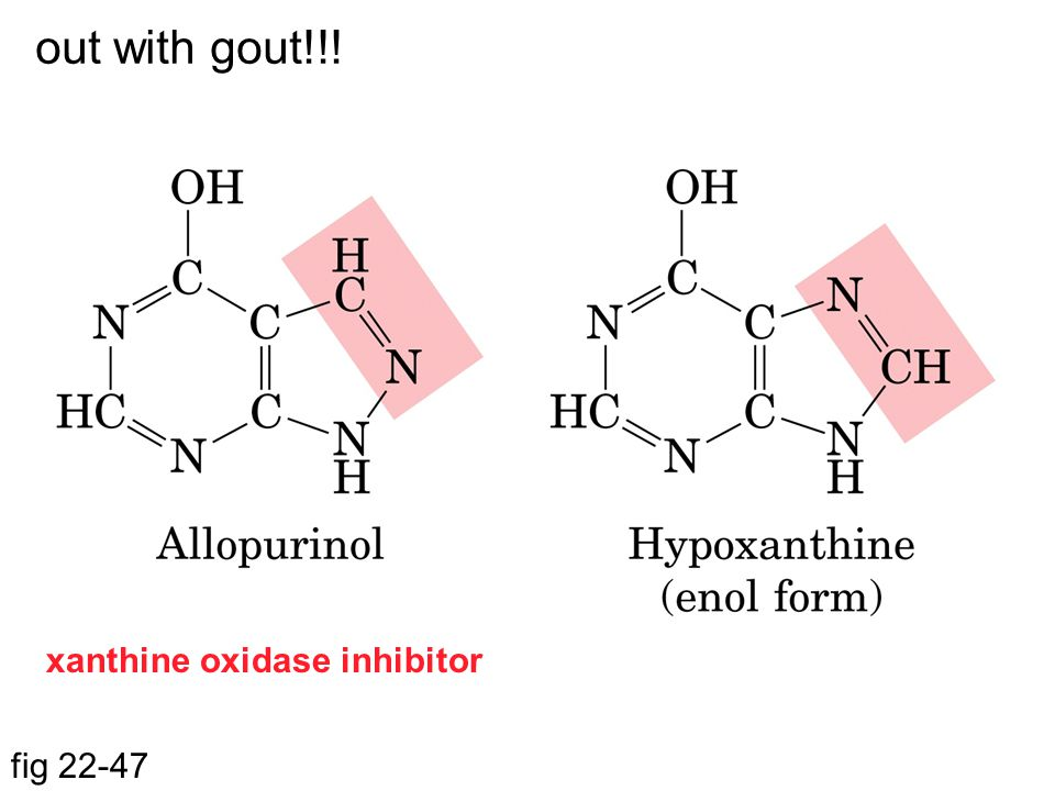 out with gout!!! xanthine oxidase inhibitor fig 22-47