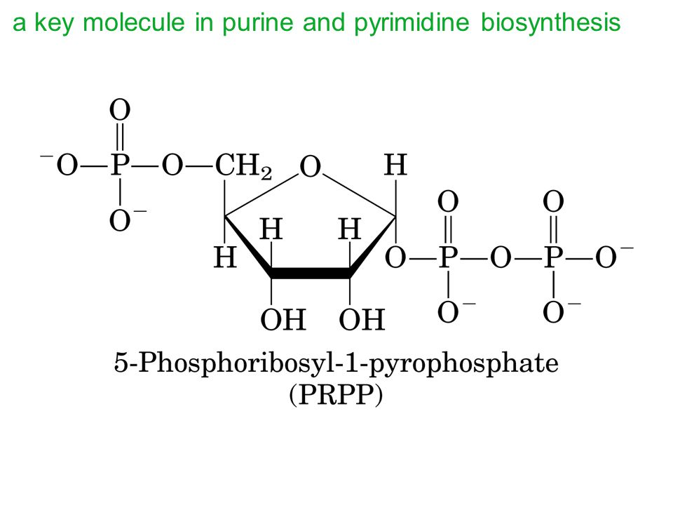 a key molecule in purine and pyrimidine biosynthesis