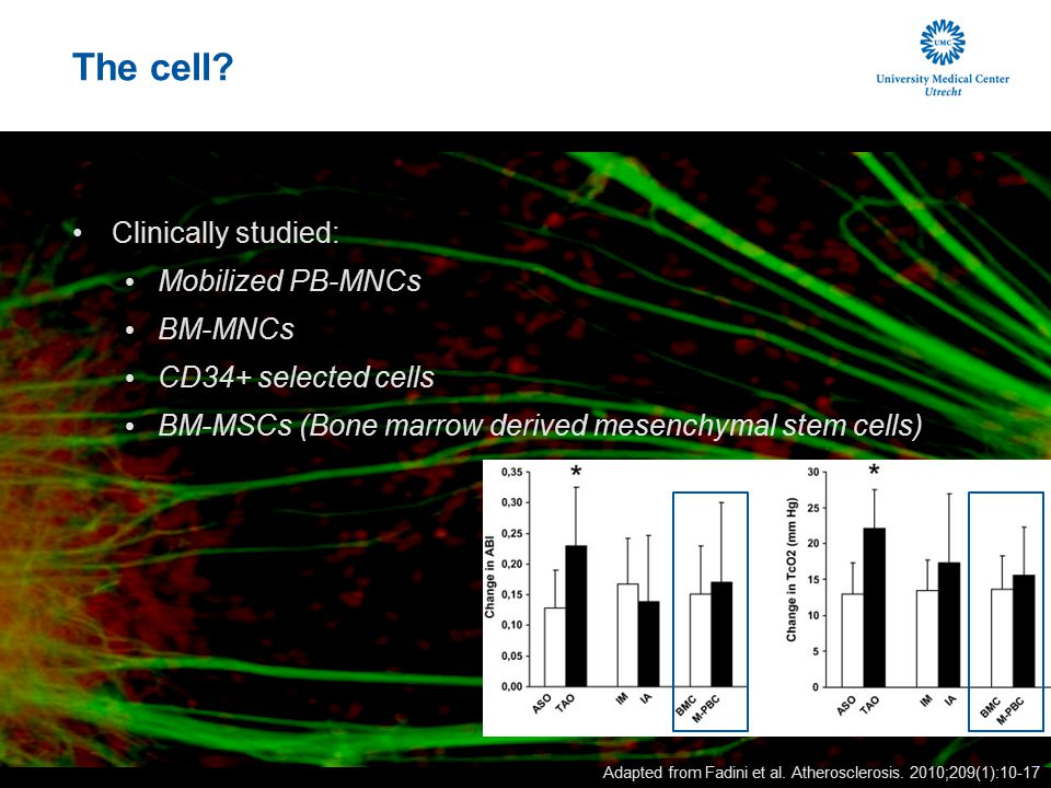 The cell Clinically studied: Mobilized PB-MNCs BM-MNCs