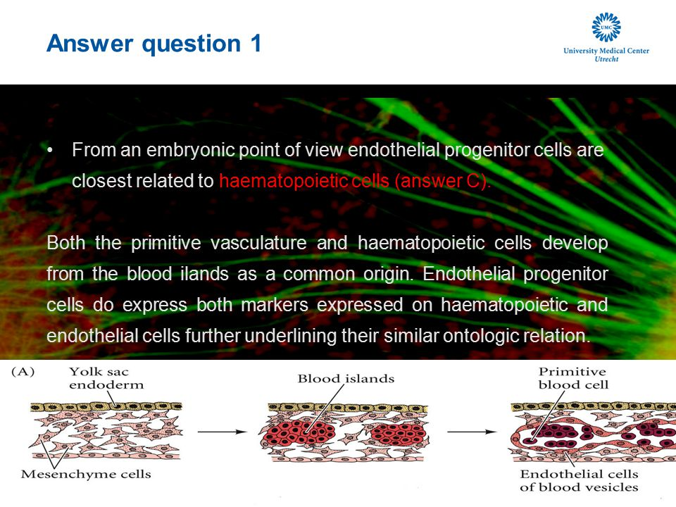 Answer question 1 From an embryonic point of view endothelial progenitor cells are closest related to haematopoietic cells (answer C).