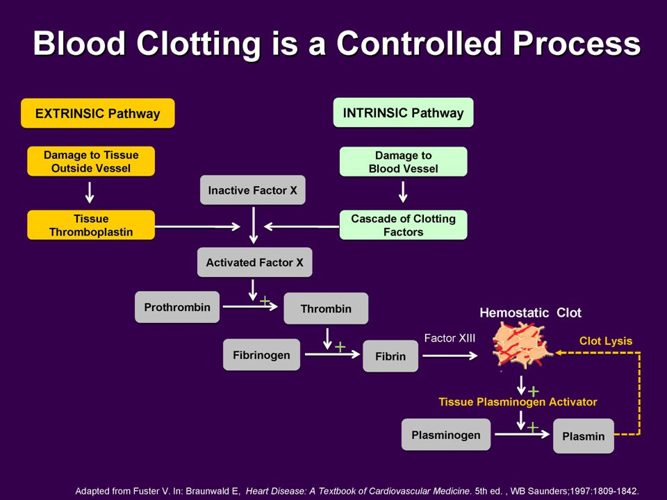 Blood clotting is the transformation of liquid blood into a semisolid gel. The blood contains about a dozen clotting factors, proteins that exist in an inactive state, but can be called into action when tissues or blood vessels are damaged. The activation of clotting factors occurs in a sequential manner. The first factor in the sequence activates the second factor, which activates the third factor and so on. This series of reactions is called the coagulation (clotting) cascade.