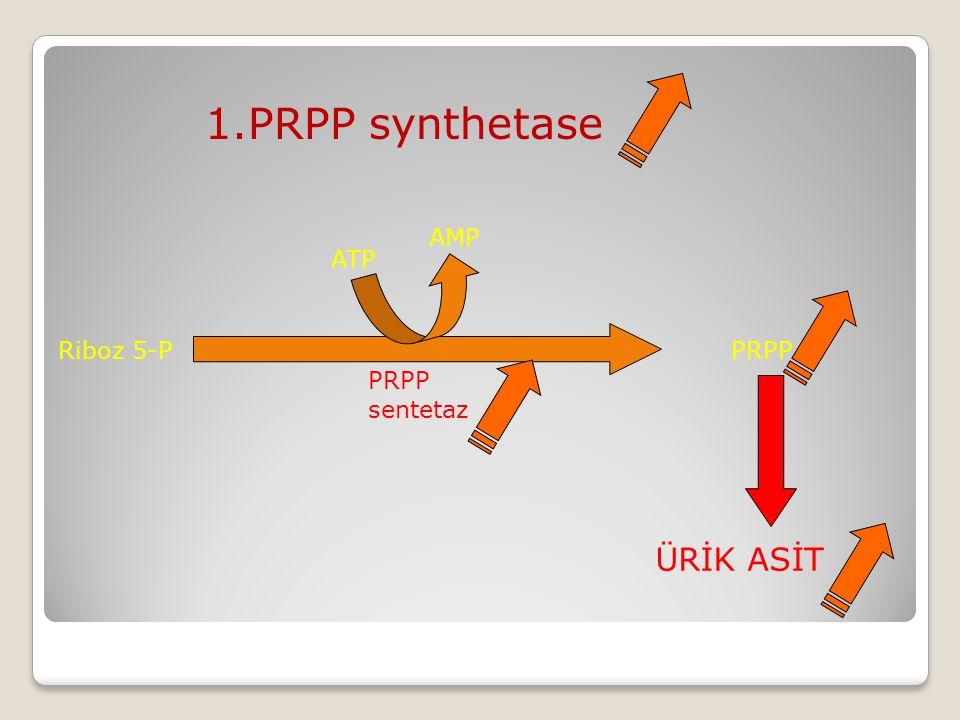 1.PRPP synthetase ATP AMP Riboz 5-P PRPP PRPP sentetaz ÜRİK ASİT