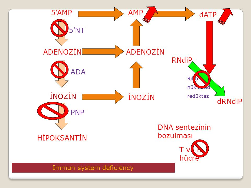 Immun system deficiency