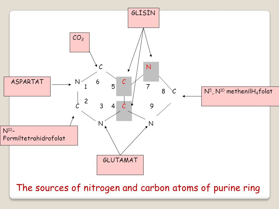 The sources of nitrogen and carbon atoms of purine ring