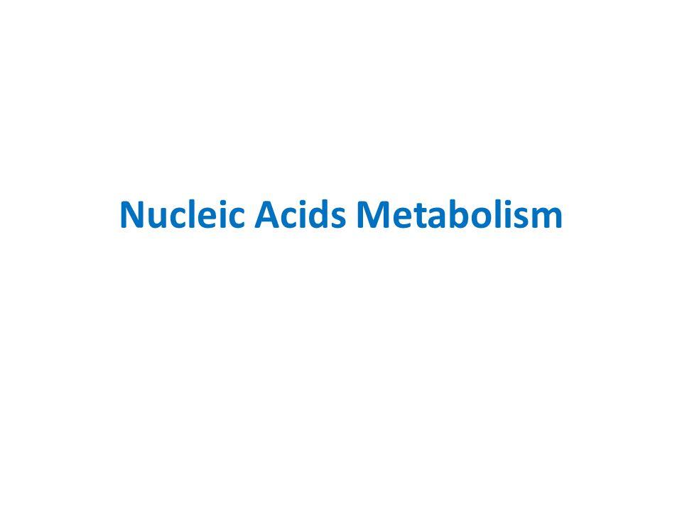 Nucleic Acids Metabolism