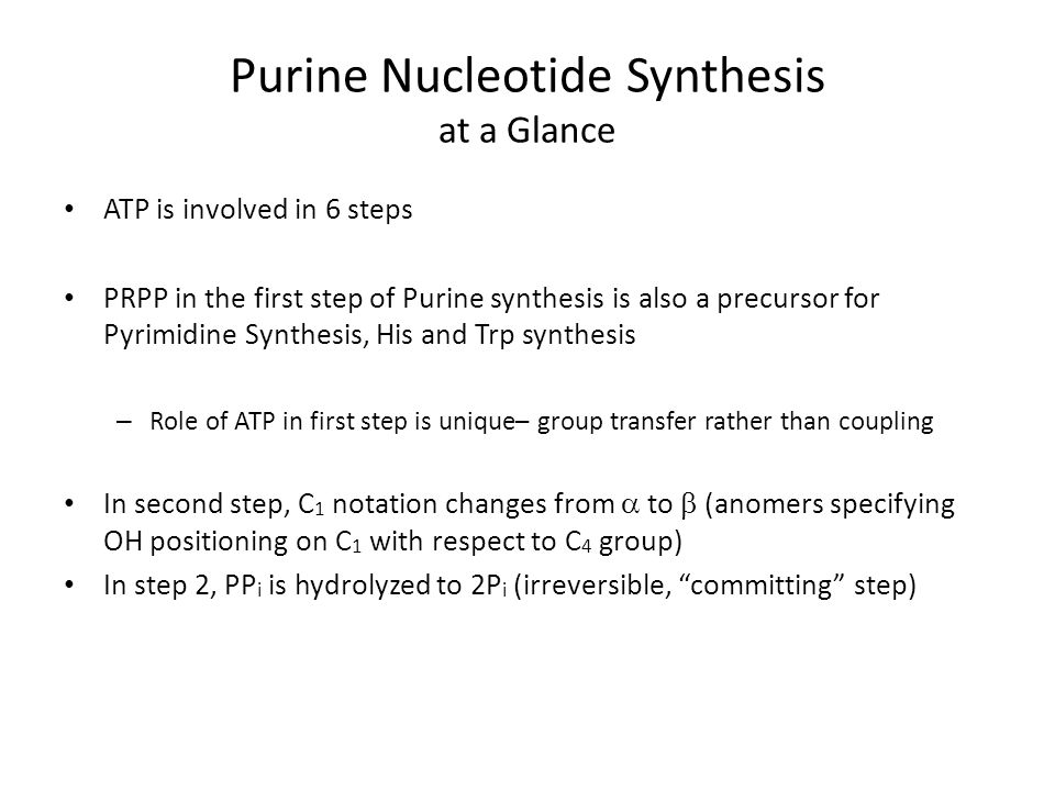 Purine Nucleotide Synthesis at a Glance